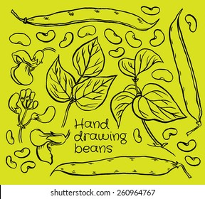 Hand drawn sketch set green beans vegetable - eco food vector ink illustration