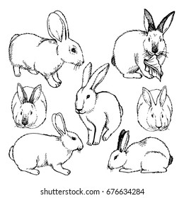 Hand drawn  Sketch Set of rabbits isolated on white. Ink illustration of rabbits sitting in various poses.