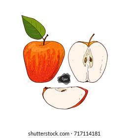 Hand drawn sketch style apple set on white background. Honeycrisp apple with leaf. Color illustration.