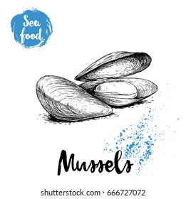 Hand drawn sketch style boiled fresh mussels. Seafood vector illustration poster for fish markets and restaurants menu.