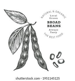 Hand drawn sketch style broad beans. Organic fresh food vector illustration isolated on white background. Retro pods illustration. Engraved botanical style cereals.