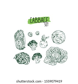 Hand drawn sketch style cabbage set. white cabbage, kohlrabi, Brussels sprouts, broccoli, cauliflower, napa cabbage. Vector illustration.