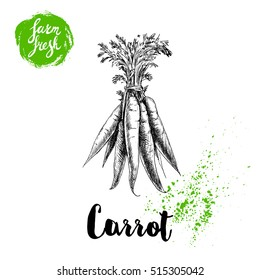 Hand drawn sketch style carrot bunch with leafs poster. Vintage looking root isolated on white background. Vector farm fresh market vegetables illustration.