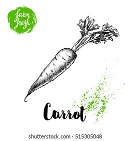 Hand drawn sketch style carrot with leafs poster. Vintage looking root isolated on white background. Vector vegetables illustration.