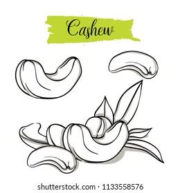 Hand drawn sketch style Cashew set. Single, group seeds, cashew in nutshells group. Organic nut, vector doodle illustrations collection isolated on white background.