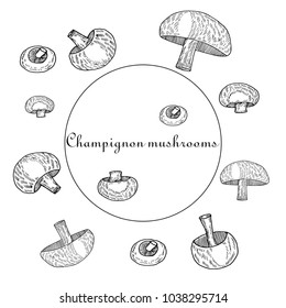 Hand drawn sketch style Champignon mushrooms.Vector illustration isolated on white background