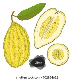 Hand drawn sketch style citron set on white background. Citron with leaf, half and sliced citron. Color illustration.
