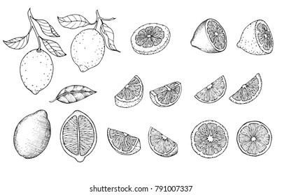 Hand drawn sketch style citrus fruits set. Lemon half, lime, tangerine, mandarin part, oranges and bergamots isolated on white background. Vector organic food illustrations.