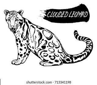 Hand drawn sketch style clouded leopard. Vector illustration isolated on white background.