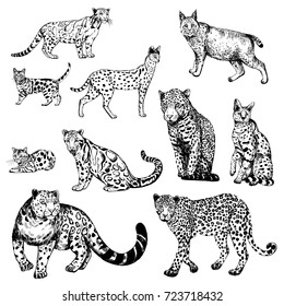 Hand drawn sketch style clouded leopard, bengal cat, leopard, serval, lynx and snow leopard. Vector illustration isolated on white background.