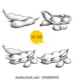 Hand drawn sketch style edamame green beans sketches set. Vegan and vegetarian food. Fresh farm market product. Vector illustrations isolated on white background.