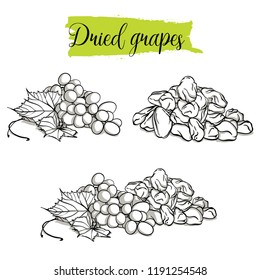 Hand drawn sketch style Grapes set. Single, group fruits, dried, raisin, branch of grapes. Organic food, vector doodle illustrations collection isolated on white background.
