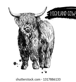 Hand drawn sketch style highland cattle isolated on white background. Vector illustration.