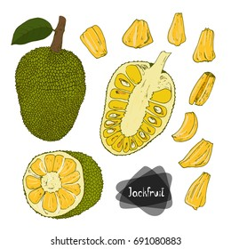 Hand drawn sketch style Jackfruit set on white background.  Color illustration.