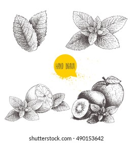 Hand drawn sketch style mint illustrations set. Mint leafs, lemon or lime fruit with peppermint, apple, kiwi fruits with mint leafs. Herbal healthy product collection isolated on white background.