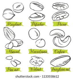 Hand drawn sketch style nuts and seeds set. Pine nut seeds. Pistachio, almond, walnut, pecan, cashew, hazelnut, macadamia and brazilian nut. Nuts, vector doodle illustrations collection isolated.