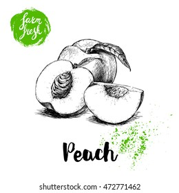 Hand drawn sketch style peach fruit. Farm fresh eco food vector illustration. Ripe peach, peach slices.