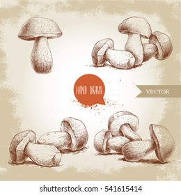 Hand drawn sketch style porcini mushroom set. Fresh forest boletus edulis. Italian food ingredient. Fresh market product.