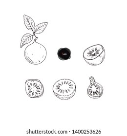 Hand drawn sketch style ripe Bael set. Stone apple. Aegle marmelos. Golden apple. Bengal quince. Vector illustration.