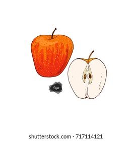 Hand drawn sketch style ripe and half apples on white background. Honeycrisp apple. Color illustration.