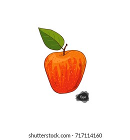 Hand drawn sketch style ripe apple on white background. Honeycrisp apple with leaf. Color illustration.