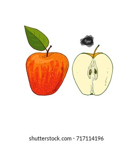 Hand drawn sketch style ripe and half apple on white background. Honeycrisp apple with leaf. Color illustration.