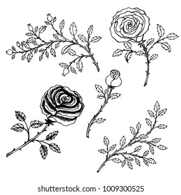 Hand drawn sketch style.  Rose flower. Vector illustration isolated on white background.