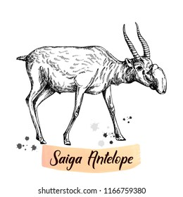 Hand drawn sketch style saiga antelope isolated on white background. Vector illustration.