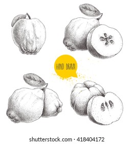 Hand drawn sketch style set of quinces. With leaf, group and sliced. Eco fruit vintage vector illustration isolated on white background.