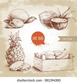 Hand drawn sketch style tropical fruits set. Bananas in wooden box, coconuts, pineapple with slices and lemons. Vintage eco food illustration.