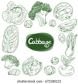Hand drawn sketch style vegetable cabbages set. White cabbage, kohlrabi, Brussels sprouts, broccoli, cauliflower, Chinese cabbage, leaf cabbage.