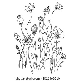Hand drawn sketch style Wild flowers . Vector illustration.