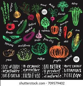 Hand drawn sketch vegetables. Artichoke, asparagus, tomato, pepper, cucumber, corn, onion, chili, beetroot, carrot, cauliflower, pumpkin, zucchini, eggplant, garlic, broccoli, beans, radish, cabbage.