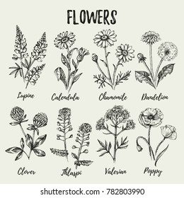 Hand drawn sketch wildflowers set. Vector illustration of medical herbs and flowers