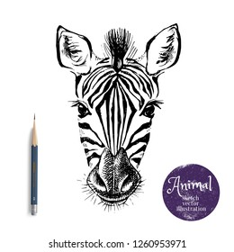 Hand drawn sketch zebra head illustration. Isolated cute portrait on white background
