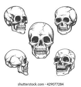 Hand drawn skulls. Blackicons on white background. Vector Illustrations set