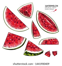 Hand drawn sliced watermelon. Vector colored engraved illustration. Juicy summer fruit. Food healthy ingredient. For cooking, cosmetic package design, medicinal herb, treating, health care