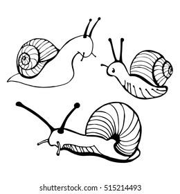 Hand drawn snails. Vector illustration.