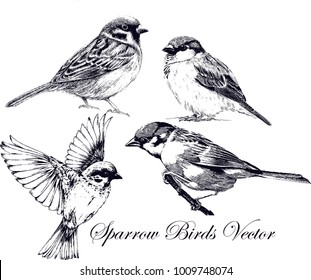 Hand drawn sparrow bird collection Vector