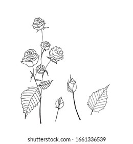 hand drawn spray rose illustration in doodle style in vector. spray rose elements black on white background for decoration, greeting cards