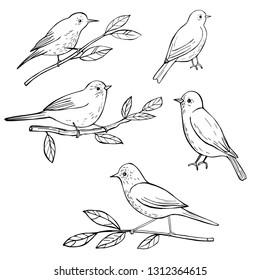 Hand drawn spring birds. Vector sketch  illustration.