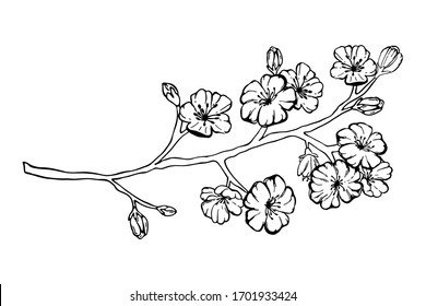 Hand drawn spring sakura, flowers, blooming tree branches, floral elements isolated on white background. Ink vector doodle sketch illustration for design cards, invitations, tattoo, coloring book