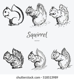 hand drawn squirrel