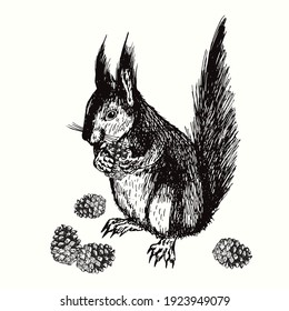 Hand drawn squirrel holding pine cone. Ink black and white drawing. Vector illustration