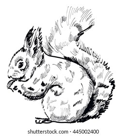 hand drawn squirrel on a white background. Vector