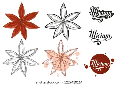 hand drawn star anise, spicy ingredient, star anise logo, healthy organic food, spice star anise isolated on white background, culinary herb, label, food, natural health food, vector graphic to design