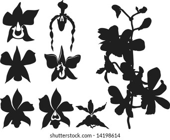 Hand drawn stylized Orchids, one color