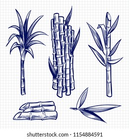 Hand drawn sugar cane set vector illustration. Cane plant, sugar ingredient stem, sugarcane harvest stalk