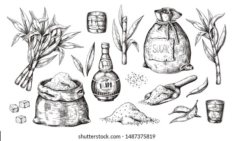 Hand drawn sugarcane and rum. Vintage liquor bottle and glasses, sugar sack and cubes, sugar organic plants. Vector illustration engraved alcoholic beverage image on white background