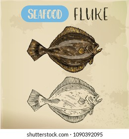 Hand drawn summer flounder or fluke. Sketch of seafood for shop or store signboard, restaurant menu or trophy room. Sport fishing and catch, water and aquatic, marine and nautical theme